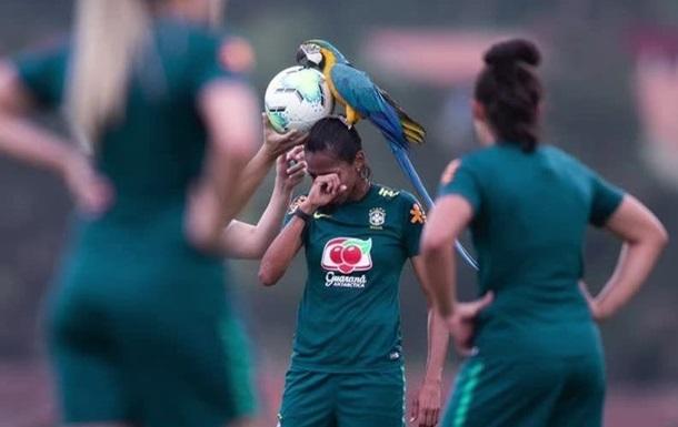 Дерзкий попугай прервал тренировку футболисток