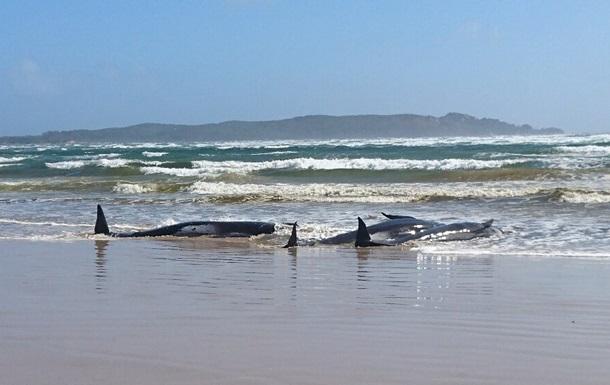 В Австралії сотні дельфінів загинули, викинувшись на берег