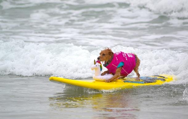 В США соревновались собаки-серфингисты