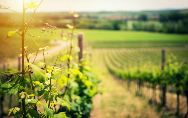 У Калифорнийского вина появился специфический привкус