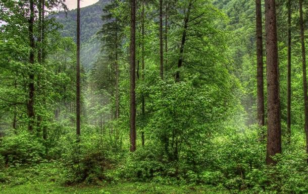 Удастся ли заставить евреев идти через горы и лес?