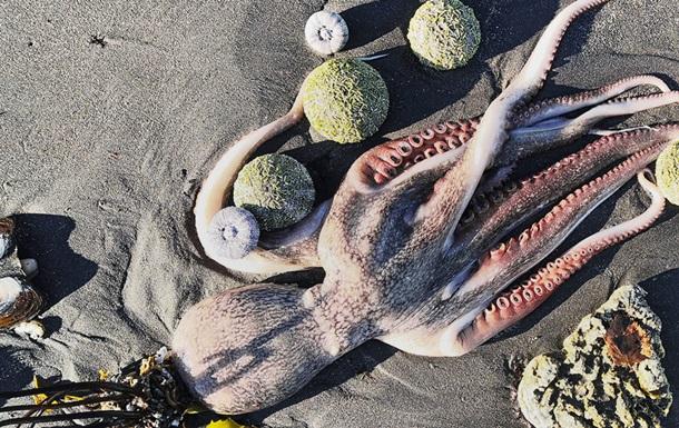 Убийство Тихого океана. Что произошло на Камчатке?
