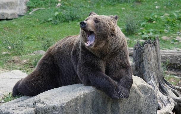 Огромный медведь напал на артиста во время шоу
