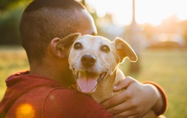 Вчені з ясували, як собаки сприймають обличчя людей