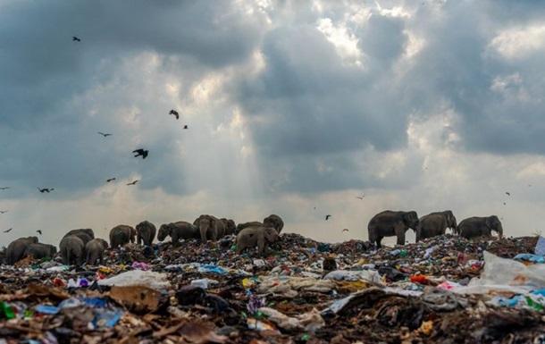 Фото слонов на свалке выиграло конкурс в Британии