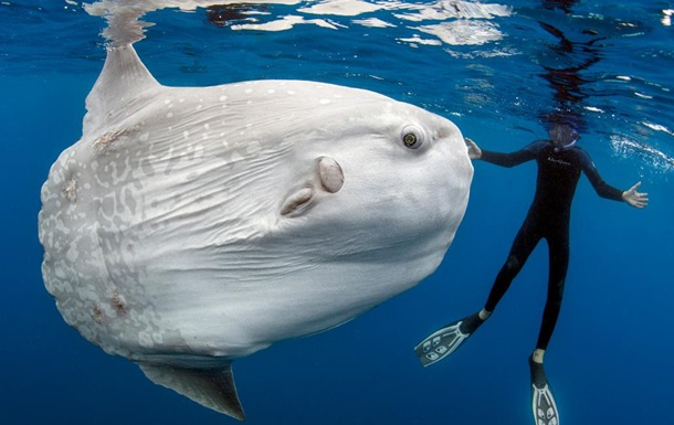 Американцев обвинили в зависти к рыбе-луне