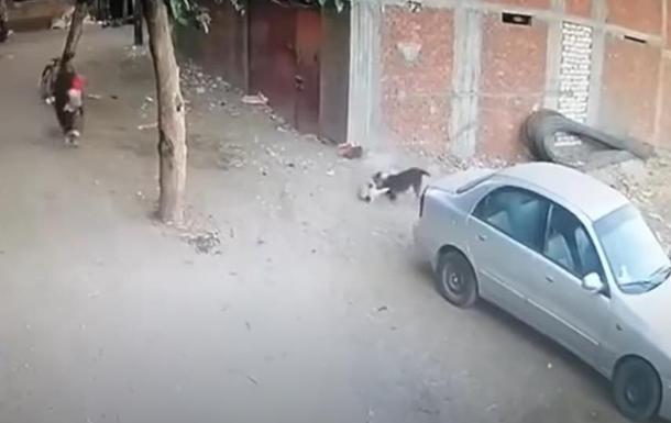 В Бразилии кот спас ребенка от собаки