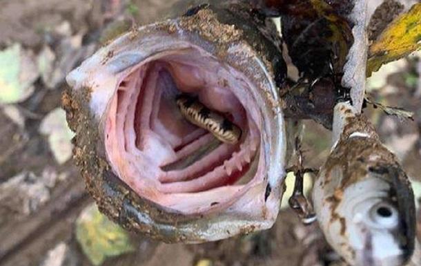 Американець зловив рибу зі змією в роті