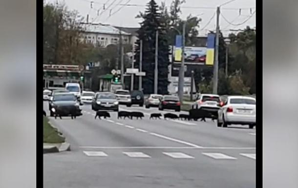 В Харькове кабаны остановили движение автомобилей