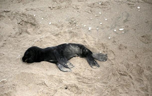 На побережье Намибии вымыло тысячи мертвых тюленей