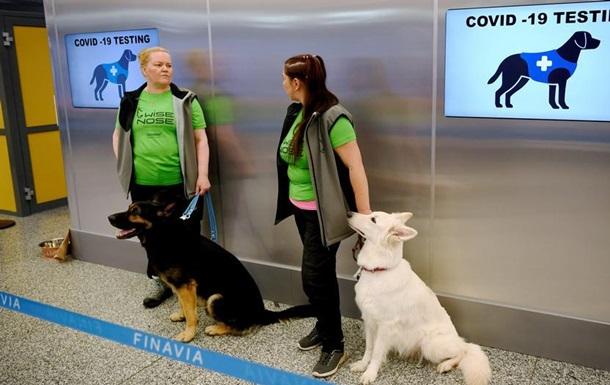 Собаки розпізнають COVID-19 за запахом. Як цим користуються в ЄС