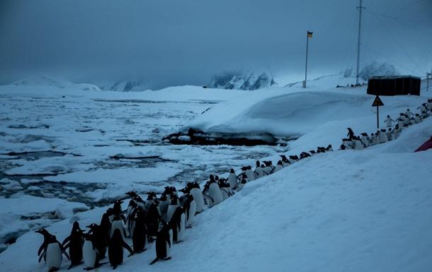 В Антарктиде пингвины оказались в ледовой ловушке