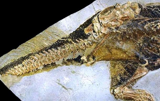 Ученые показали, как выглядит клоака динозавра