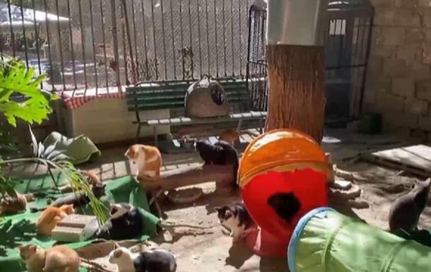 В Испании открыли приют для котов, оставшихся без хозяев из-за COVID