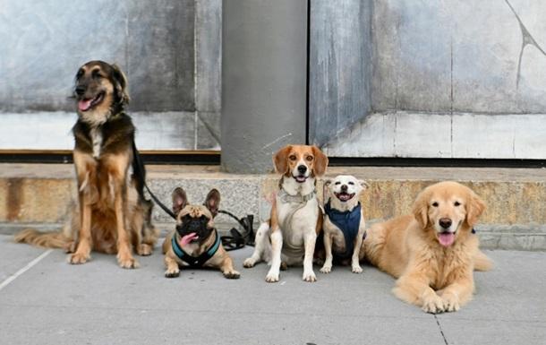 Ученые установили, откуда пошло многообразие пород собак