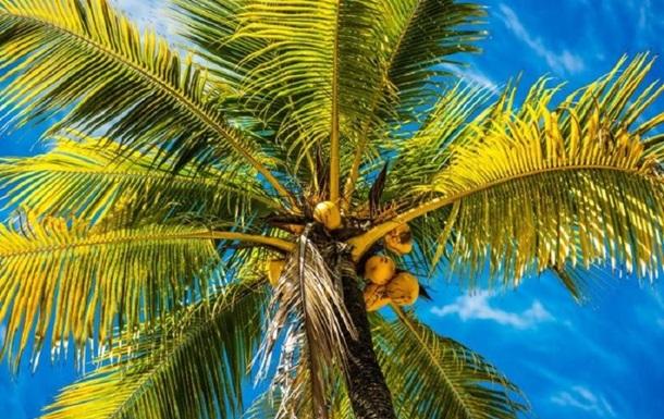В Индонезии студентам разрешили платить за учебу кокосами и листьями