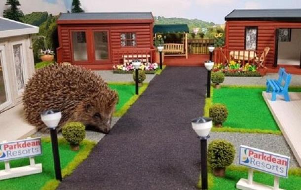 В Британии открыт первый в мире парк для ежей