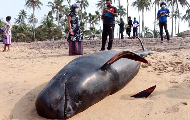 На Шри-Ланке спасли 120 черных дельфинов