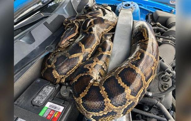 Американец нашел под капотом своего авто питона