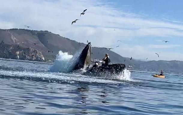 В США кит напал на лодку с девушками