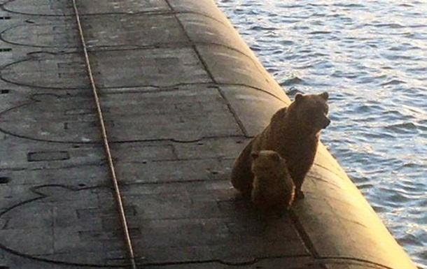 На Камчатке возле подлодки застрелили медведицу с детенышем. 18+