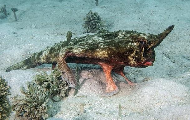 Дайвер снял рыбу, которая использовала плавники вместо ног