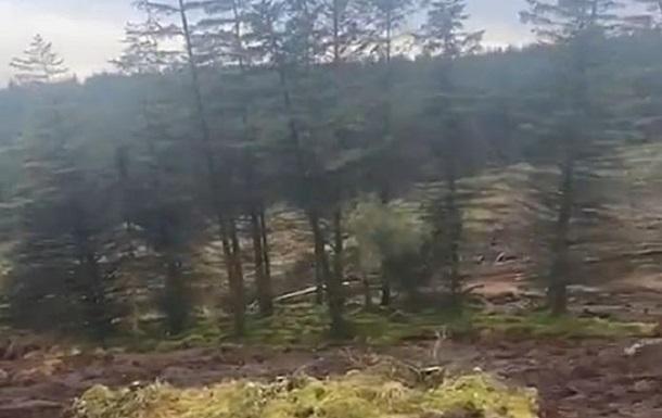 В Ирландии оползень  переместил  часть леса
