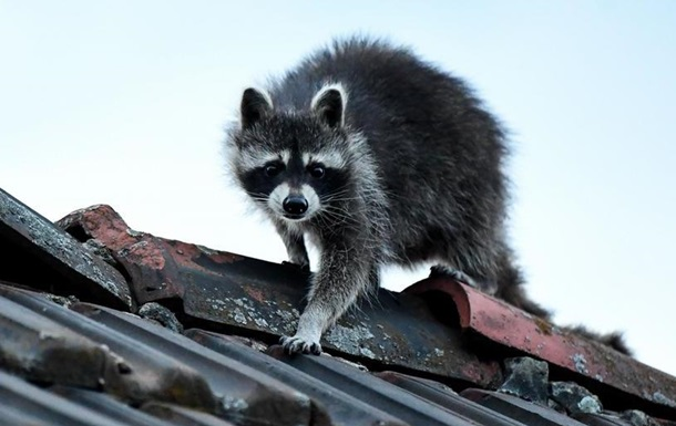 Европу захватывают чужеродные животные и растения