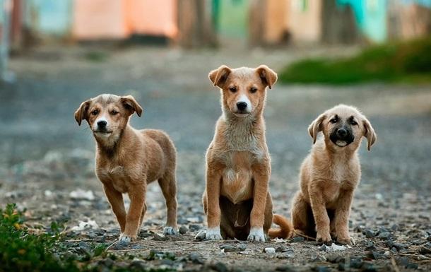 Обама и Трамп стали самыми популярными кличками для собак в России