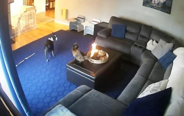 Видео поджегшего себе хвост кота стало хитом сети
