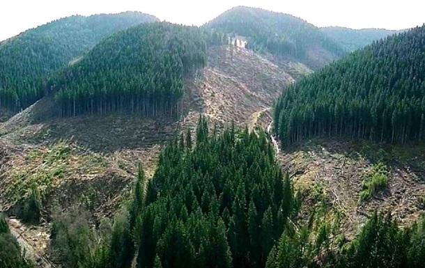 Вырубку леса в Карпатах ограничил Кабмин