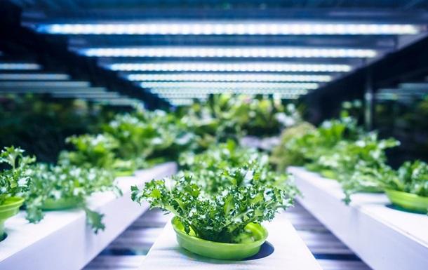 Возле Копенгагена открылась крупнейшая в Европе вертикальная ферма