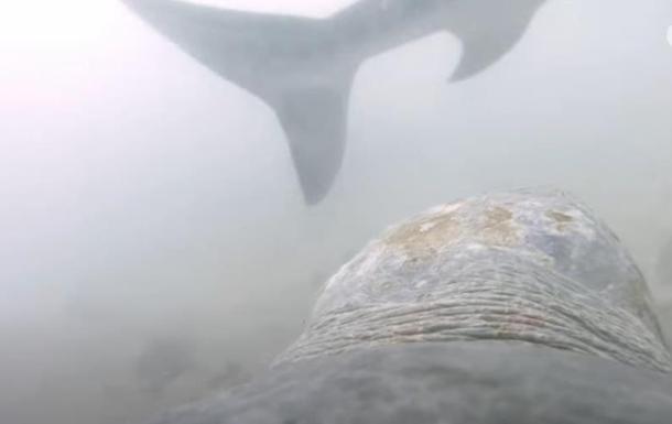 В Австралии черепаха напала на акулу