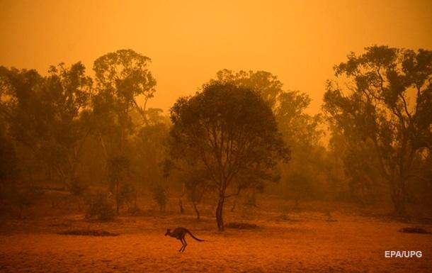 Пожары, потопы, саранча. Катастрофы 2020 года