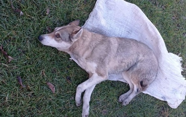 Побиття підлітками собаки у Львівській області: нові подробиці
