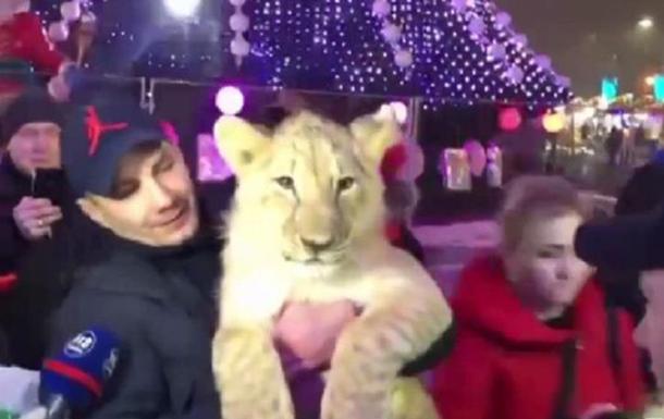 В Харькове на ярмарке выгуливали домашнего львенка