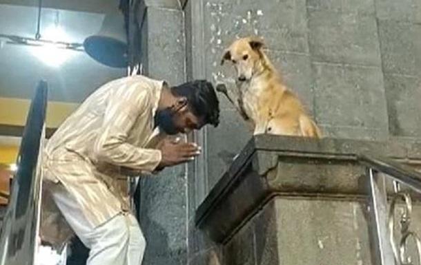В Індії собака  благословляє  відвідувачів храму