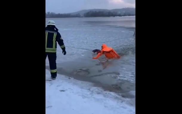 В Киеве спасли провалившегося под лед пса