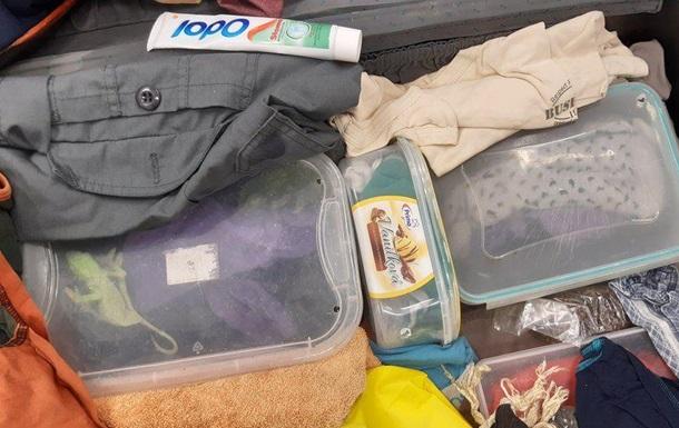 В аэропорту Вены в чемодане нашли десятки хамелеонов
