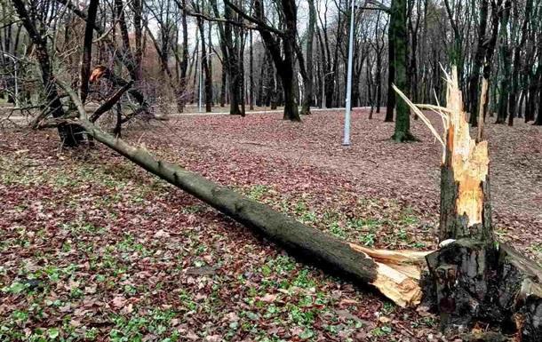 В Киеве ветер сломал десятки деревьев
