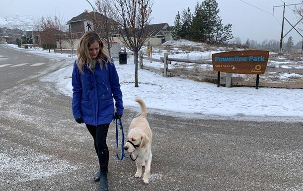 У Канаді фіксують випадки передозування наркотиками у собак