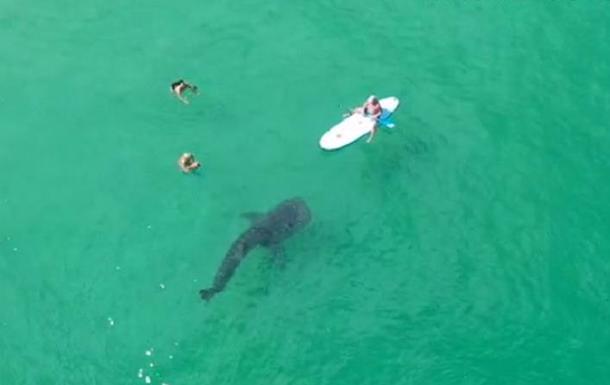 Гигантская акула застряла в камнях возле пляжа