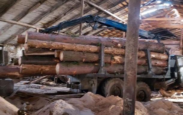 На Львівщині лісники вирубали майже 300 дерев