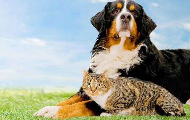 Защита животных – путь к цивилизованному обществу.