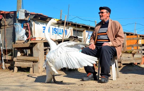 Турецкий почтальон подружился с лебедем