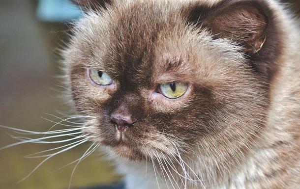 На Полтавщине кошка с бешенством искусала хозяев