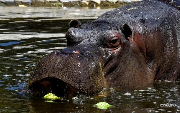 Наследство Эскобара. Кокаиновые бегемоты Колумбии