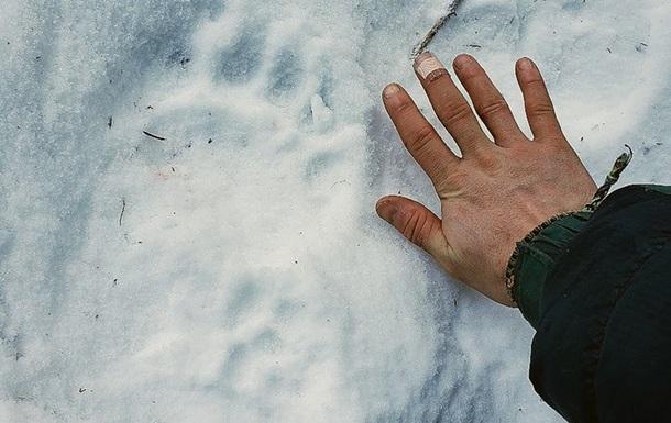 На Алясці ведмідь укусив місцеву жительку за сідниці