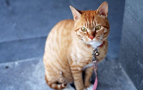 Одеситка жорстоко розправилася з котом за те, що він подряпав їй руку