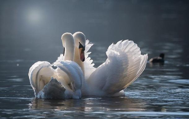 На Херсонщині знову масово гинуть птахи